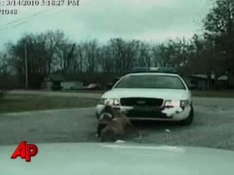 Raw Video: Dog Attacks Police Cruiser