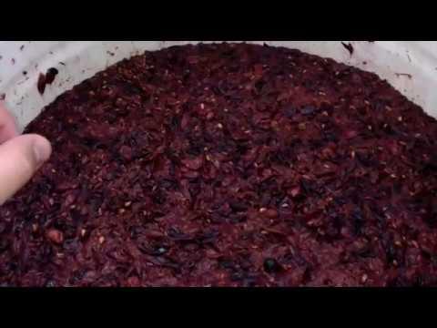 Домашнее вино рецепт и приготовление  с винного винограда + лидия красное полусухое.