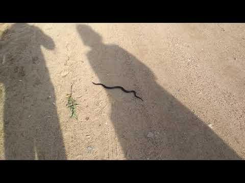Змея в центре поселка Первомайский( 70 км от Сыктывкара)