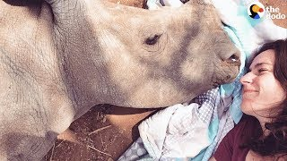 Baby Rhino Loses Her Mom And Finds The Sweetest New Friend | The Dodo