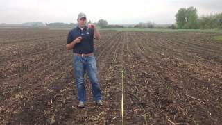 Corn Stand Evaluation By Steve Eichenberger