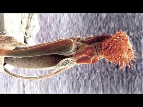 Частное фото писек с вытекающей спермой Лучшее