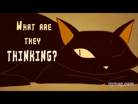 "Your Cat Is Talking To You: ""The Science of Us"" Episode 4"