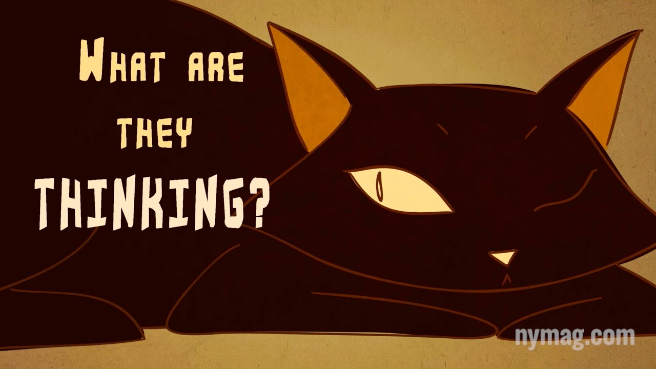 """Your Cat Is Talking To You: """"The Science of Us"""" Episode 4"""