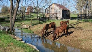 Ramsey Farm : chez le plus grand propriétaire éleveur du Kentucky