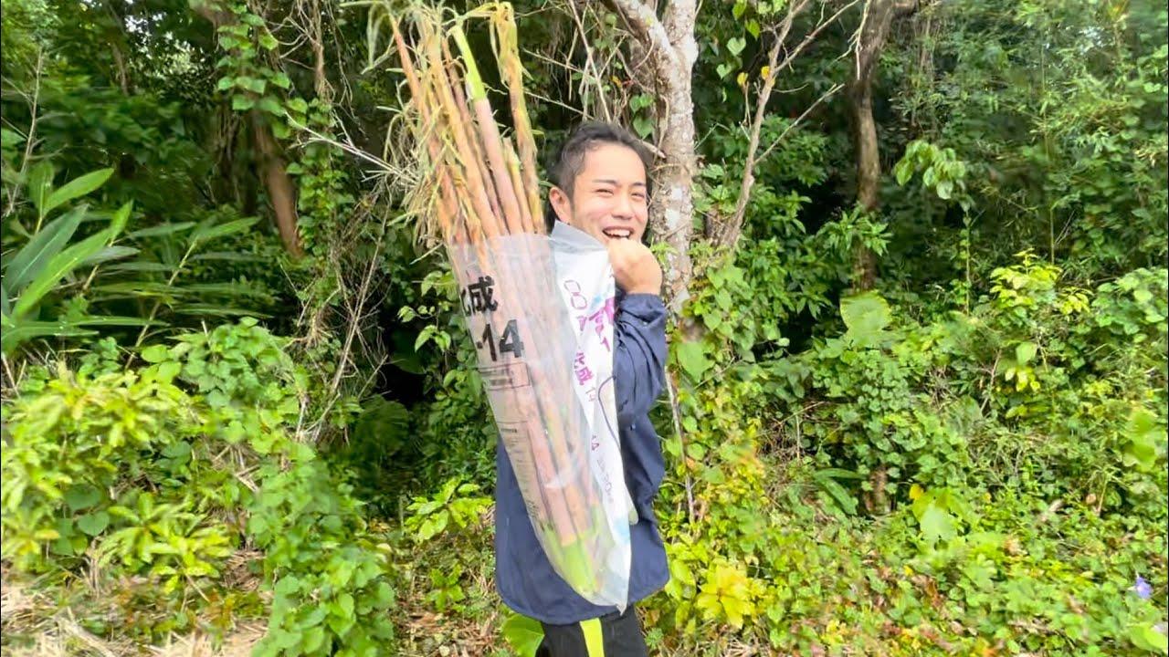 野山でタケノコを採って『炭火焼き』で食べる至高の時間