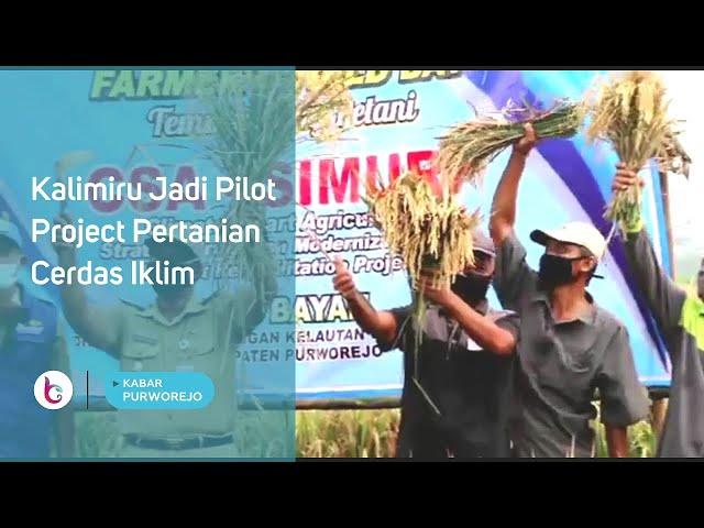 Kalimiru Jadi Pilot Project Pertanian Cerdas Iklim