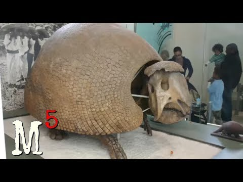 5 Mysterious Fossil Discoveries Science Can't Explain