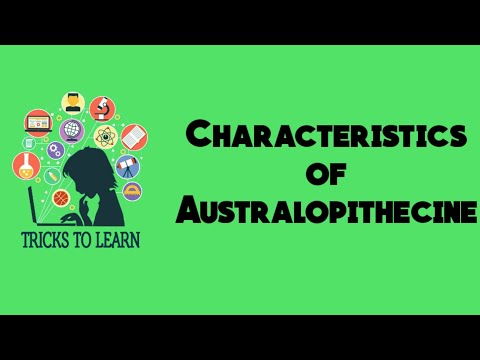 Characteristics of Australopithecine- Anthropology