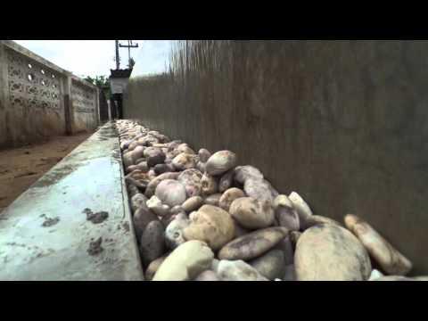 รีวิวบ่อเลี้ยงปลาคาร์ฟนำ้ล้นจาก อควาโปรซิตเต็มป์ AQP SYSTEM
