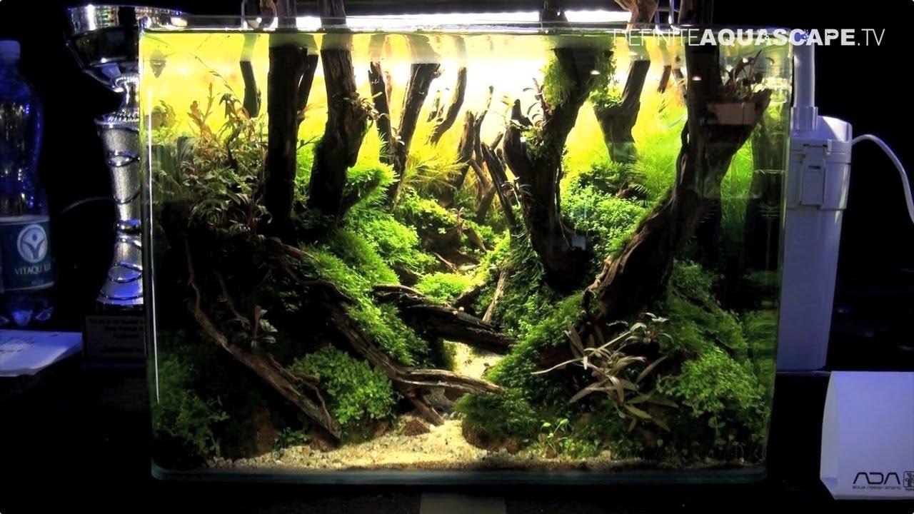 The art of the planted aquarium 2017 nano tanks 10 13 for Plante nano aquarium