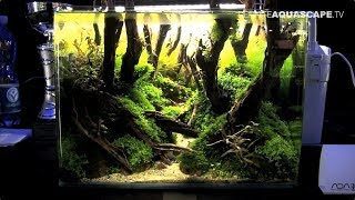 The Art of the Planted Aquarium 2017 - Nano tanks 10-13