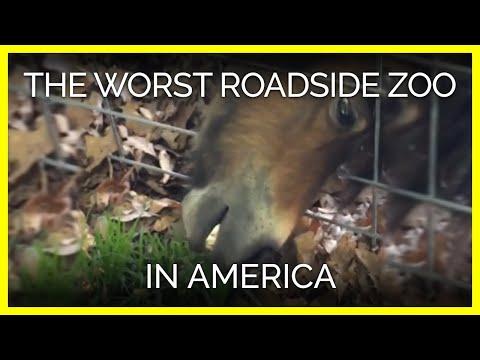Meet the Worst Roadside Zoo in America