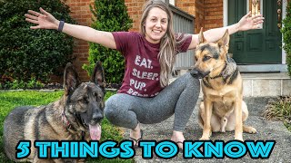 5 Things to Know Before Getting a German Shepherd!