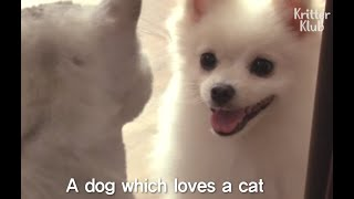 Dog Can't Stop Smiling At The Cat He Loves | Kritter Klub