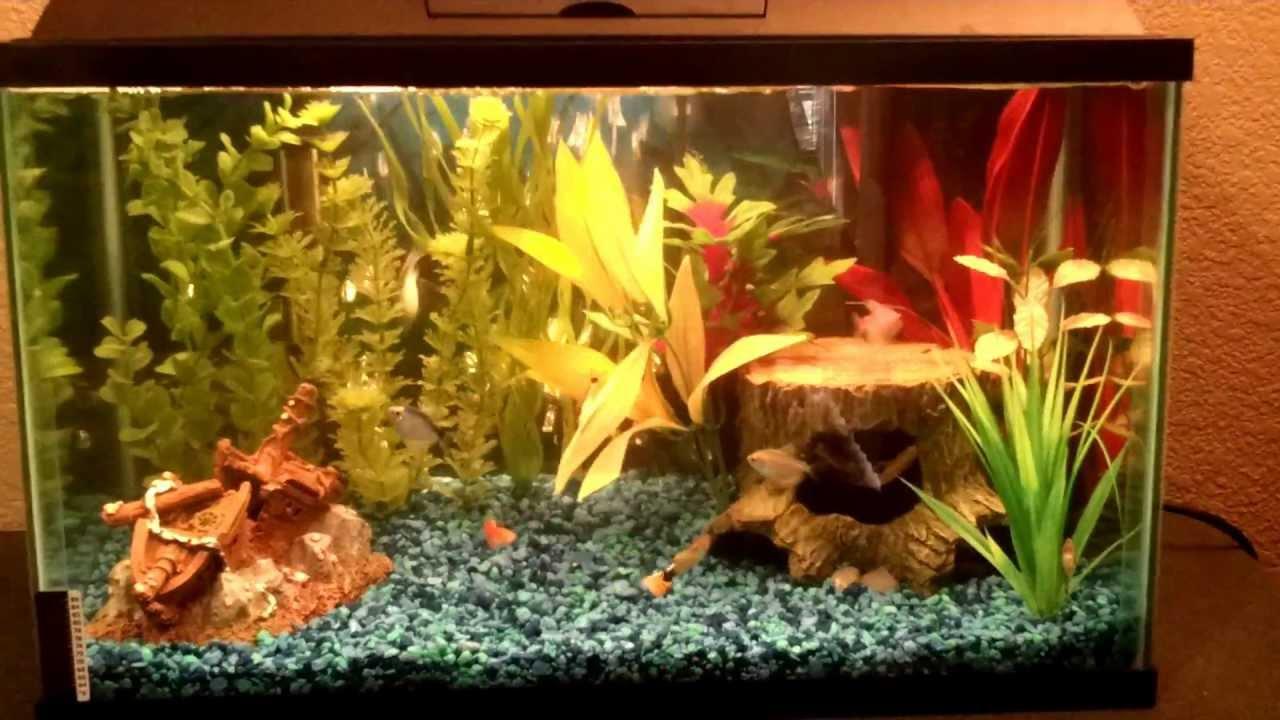 10 Gallon Freshwater Aquarium With Aqua-Tech 5-15 Filter ... 10 Gallon Home Aquariums