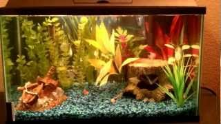 10 Gallon Freshwater Aquarium With Aqua-tech 5-15 Filter