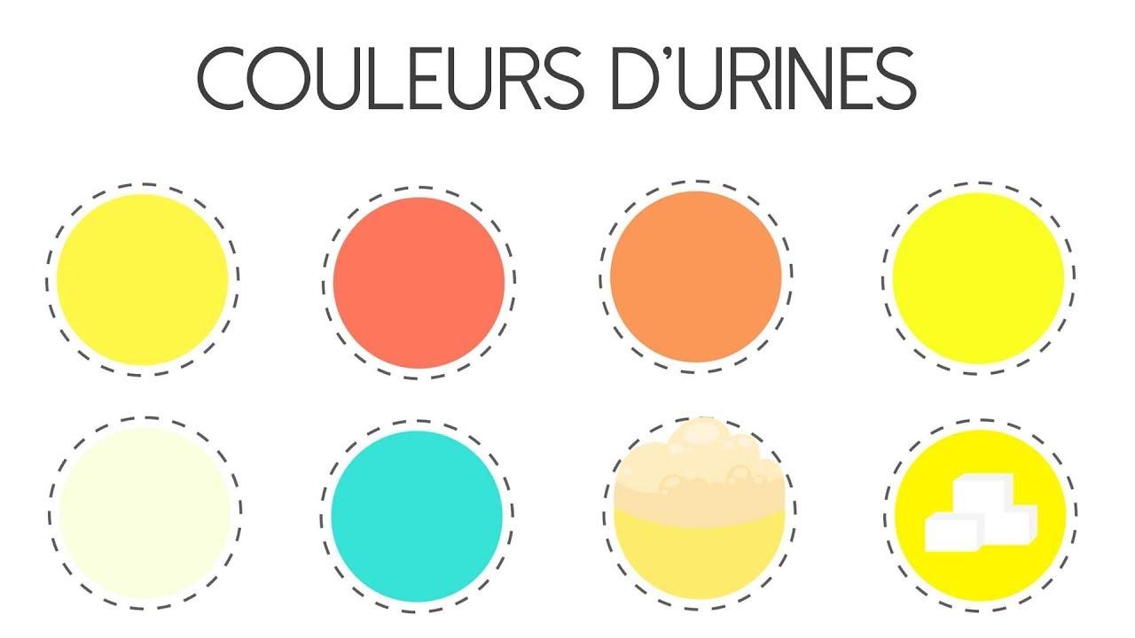Download Ce que la couleur de votre urine révèle sur votre santé