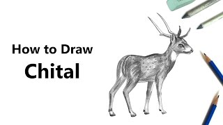 How to Draw a Chital with Pencils [Time Lapse]