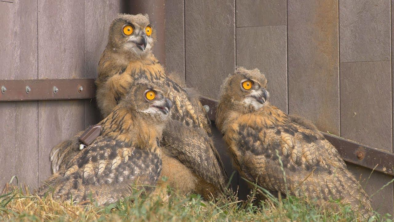 Mladí velcí ptáci