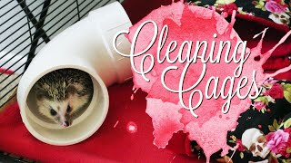 Cleaning the Hedgehog & Guinea Pig Cages    Midwest Critter Nations