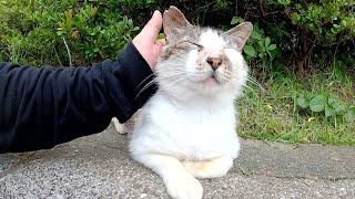無邪気に遊ぶ仲間猫たちを温かく見守る長老猫