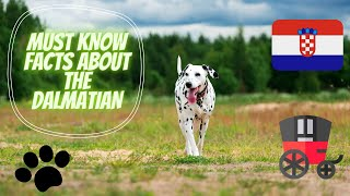 Getting To Know Your Dog's Breed: Dalmatian Edition