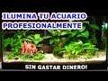 ILUMINAR TU ACUARIO DE UNA FORMA BARATA CON L�MPARAS T5 - iluminaci�n de acuarios