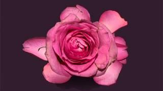 Roses (acoustic) KARAOKE