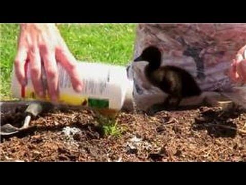 Genial Vegetable Gardening : How To Control Ants In Vegetable Gardens