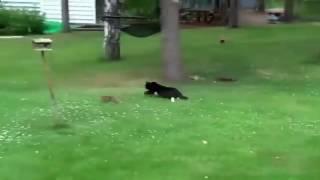 приколы про животных новые видео