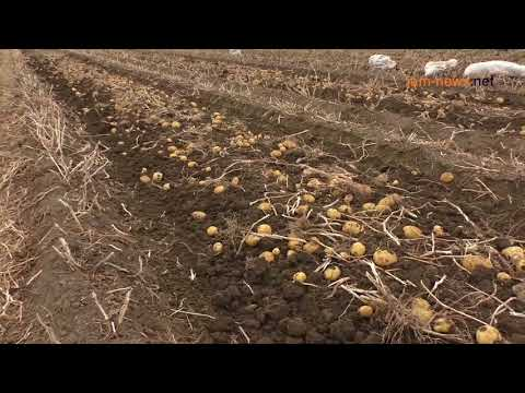 Potato harvest, Armenia, October 2017