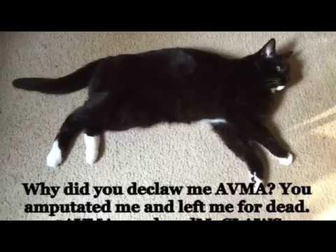 WHY THE AVMA DECLAWS HEALTHY CAT$
