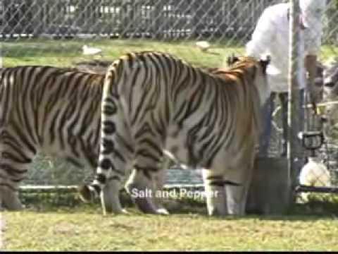 The Alabama Gulf Coast Zoo