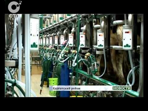 Вопрос: Правда что коровы дают больше молока если слышат классическую музыку?