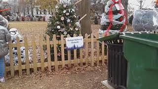 the Christmas trees