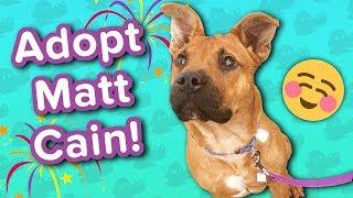 Adopt Matt Cain // Blind Shepherd Mix // Adoptable Featurette