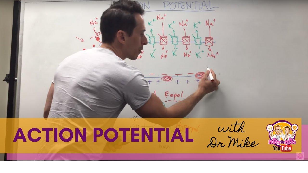 Download Action Potential   Neuron