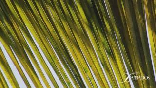 Barbados. Карибские острова(Видовой видео-ролик об острове Барбадос., 2011-12-05T08:27:56.000Z)