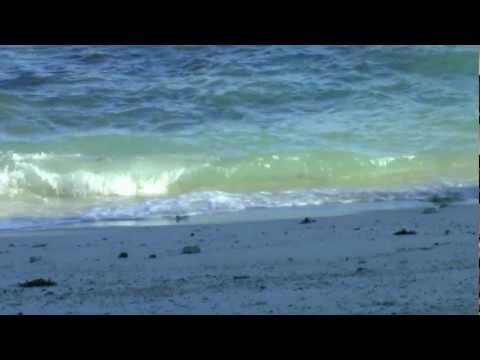 Meeresrauschen mit Möwen