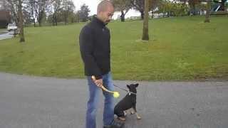 Adopted: Louie, Washington German Shepherd Dog Rescue (wgsr)
