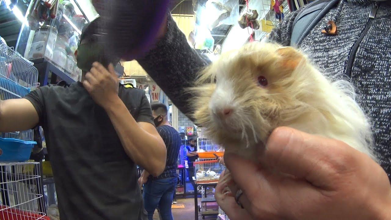Comprando nueva mascota en mercado de la raza''???????????? (Mario Blogs)