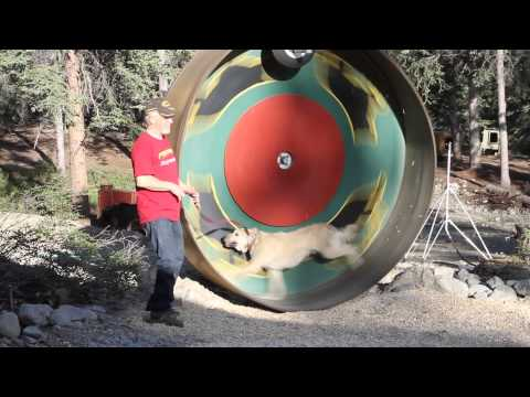 Husky Homestead Sled Dog Training Wheel - Jeff King June 2013