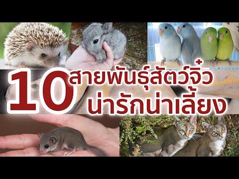 10 สายพันธุ์สัตว์แคระ สัตว์จิ๋ว น่ารักน่าเลี้ยง