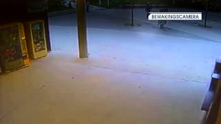[Faroek] Overval op dierenpark Planckendael in Mechelen