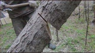 Рибалка Як завалити затиснуте верхівкою дерево Полювання Тайга бензопила пила ліс природа похід туризм