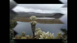 Reserva Ecológica de El Ángel - Carchi - Ecuador