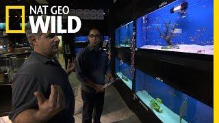 Fish Tank Kings - Avoiding a Bloodbath