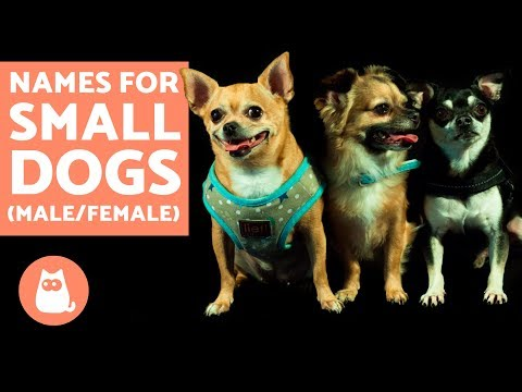 The Best Small Dogs Names -  Male & Female