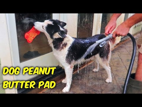 Dog Peanut Butter Pad